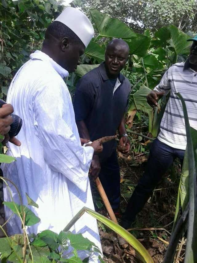 Yahya Jammeh dans ses plantations