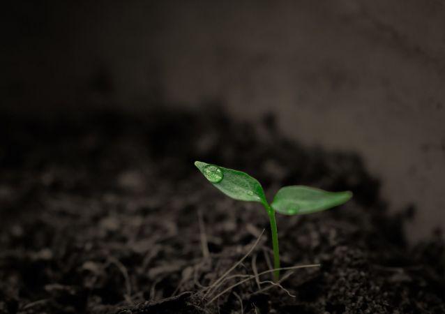 Une plante