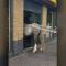 Un cheval tente d'entrer dans un McDonald's mais tout tourne mal