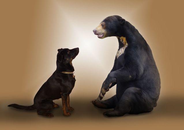 un chien et un ours