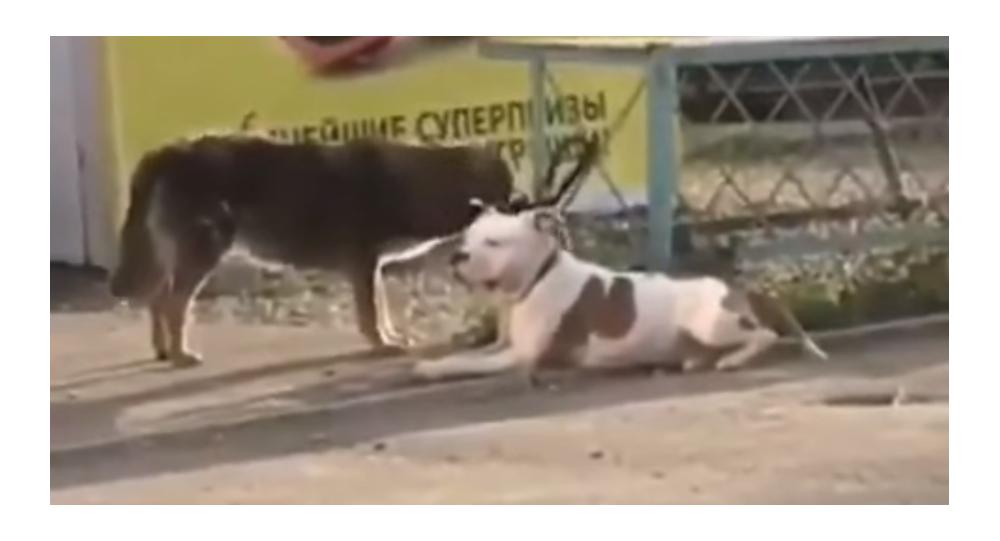 La solidarité entre chiens