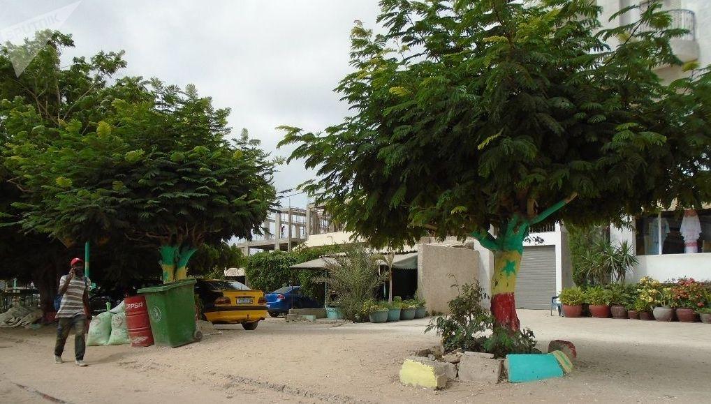 Des arbres aux troncs badigeonnés aux couleurs du drapeau Sénégal, à Dakar, le vendredi 19 juillet 2019, avant le coup d'envoi du match Sénégal-Algérie, finale de la Coupe d'Afrique des Nations (CAN) 2019.