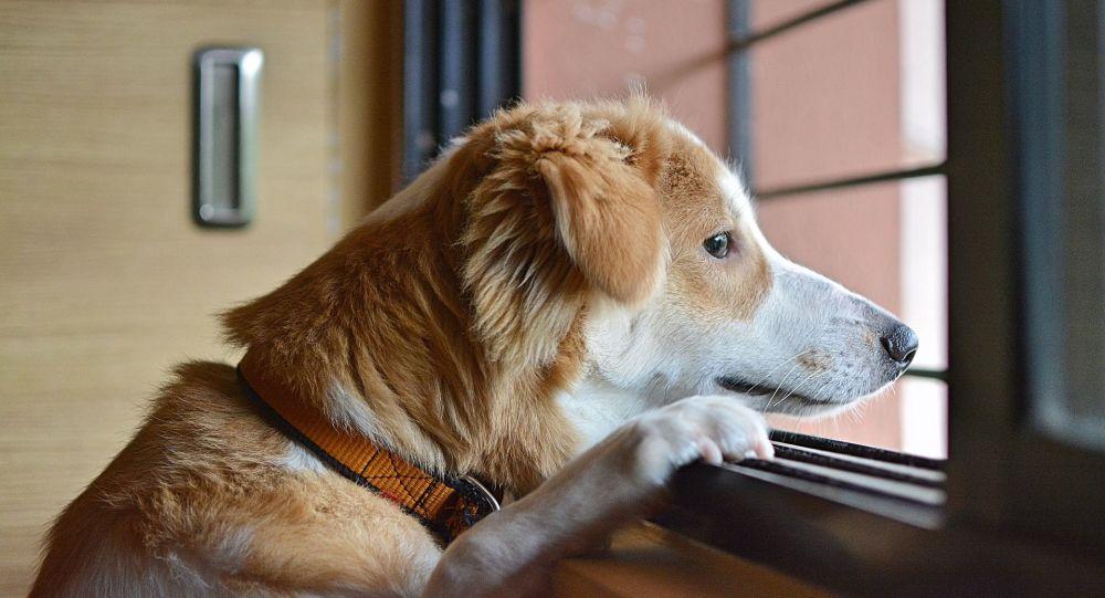 Des chiens qui ont failli se retrouver dans des assiettes en Chine seront proposés à l'adoption en France