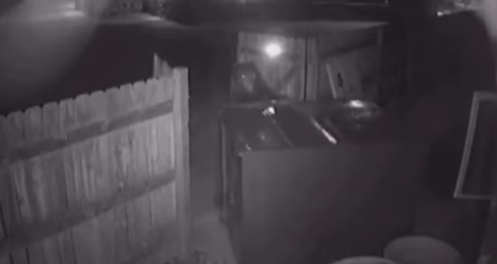 Bear attempts to take and open a trash bin at Colorado marijuana dispensary