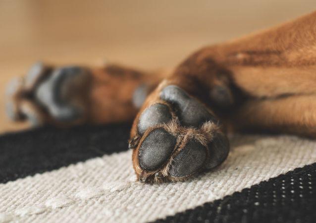 Des pattes du chien (image d'illustration)
