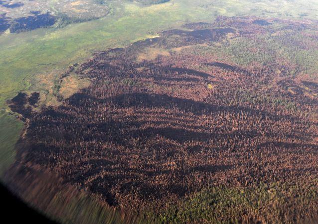 La vue sur des forêts brûlées depuis un avion Il-76 MD du ministère russe de la Défense, participant à l'extinction des feux de forêt dans la région de Krasnoïarsk