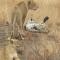 Un léopard entouré par des lions essaie de s'échapper