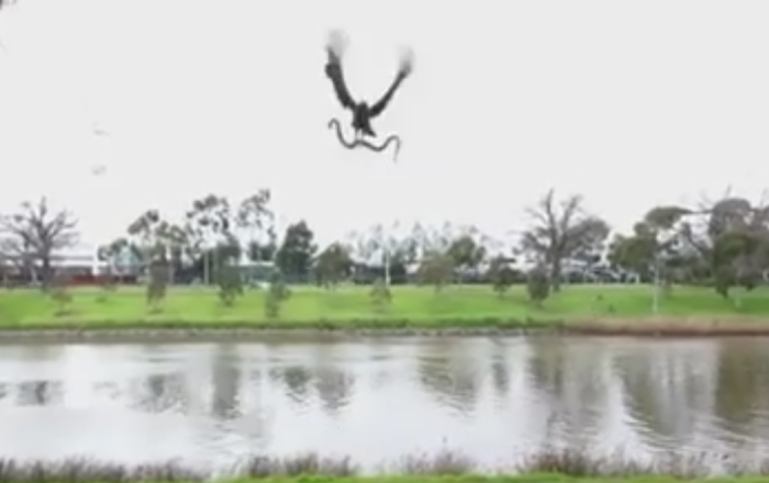 Eagle drops snake on onlookers wow SCARY
