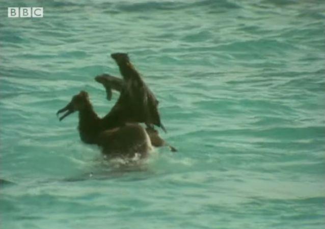 La rencontre d'un albatros et d'un requin: qui triomphe?