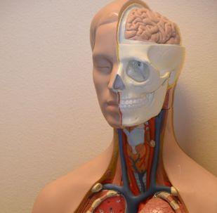 Medical anatomy