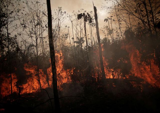 Forêt amazonienne en flammes