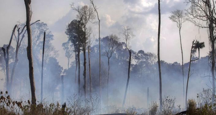 Les incendies d'Amazonie