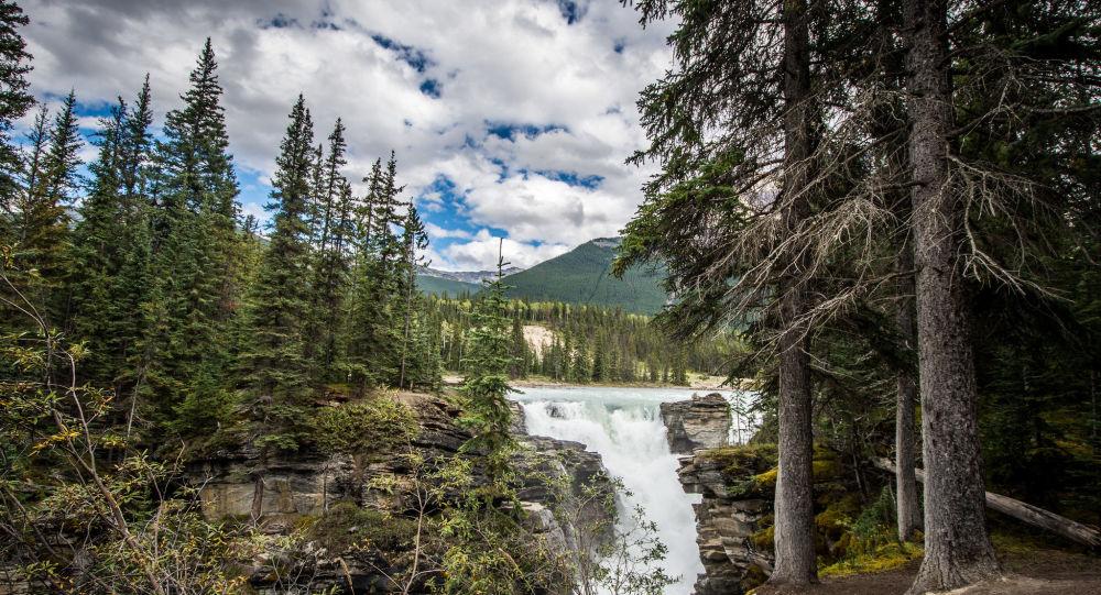 un forêt canadien, image d'illustration