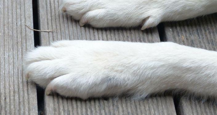 Des pieds d'un chien (image d'illustration)