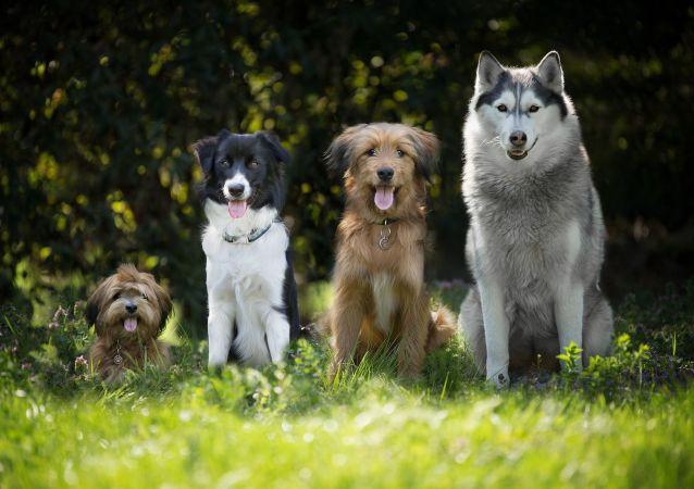 Des chiens (image d'illustration)