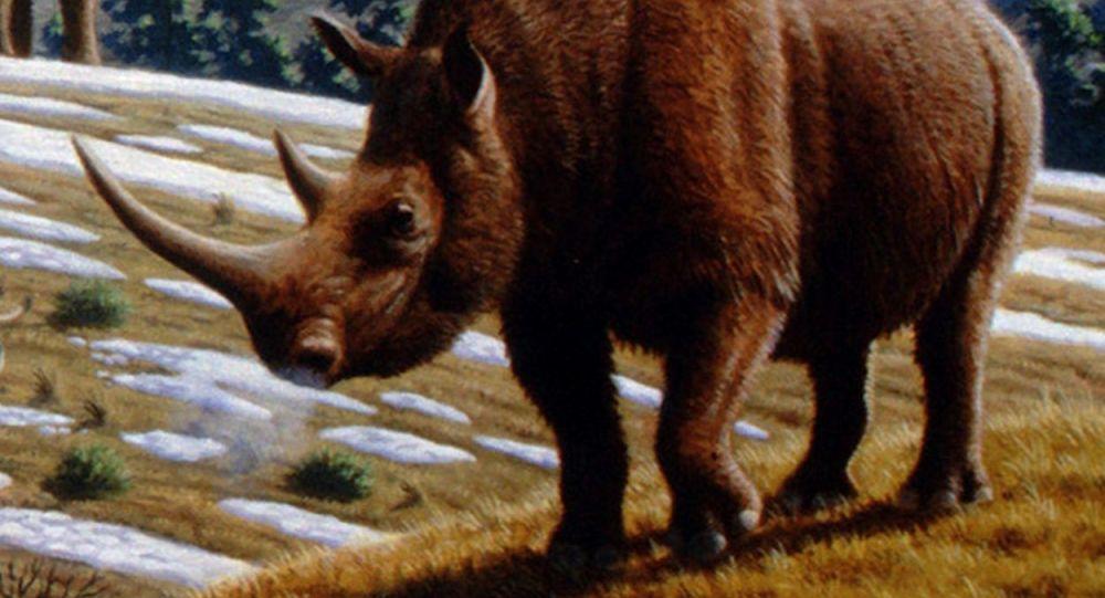 un rhinocéros laineux