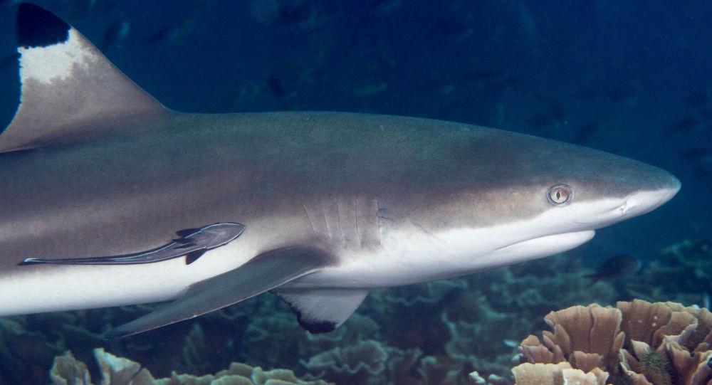 «Maman ne pleure pas»: un jeune surfeur brave une attaque de requin en Floride - photos