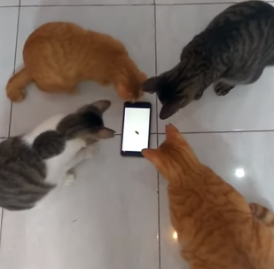 Four Cats Play Game on Phone of Catching Bugs Crawling on Screen
