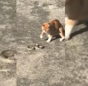 Un chat de gouttière tue un serpent échappé d'un zoo pour enfants