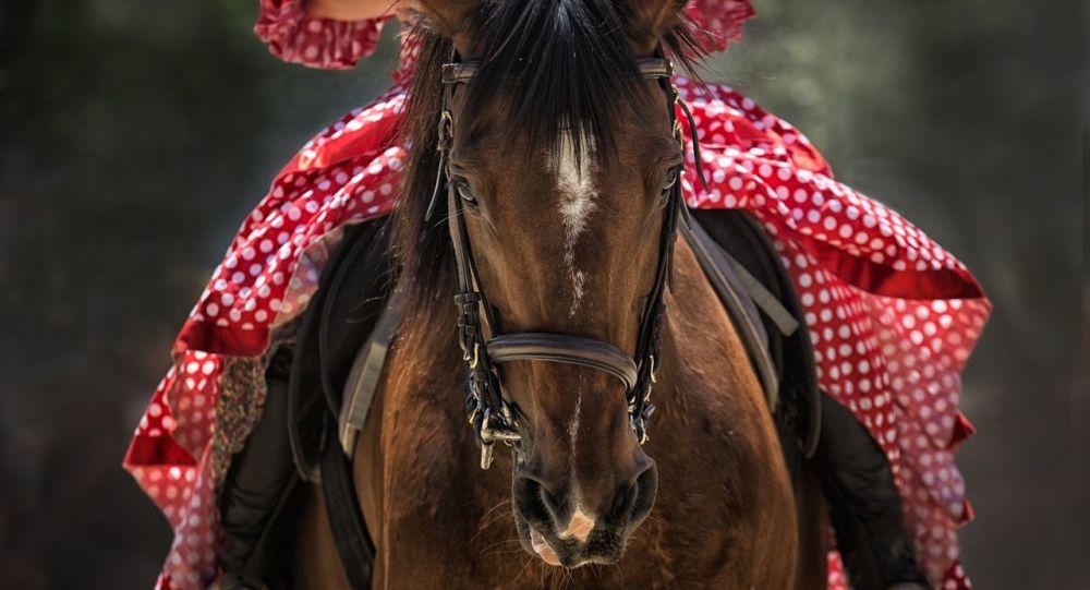 Un cheval (image d'illustration)