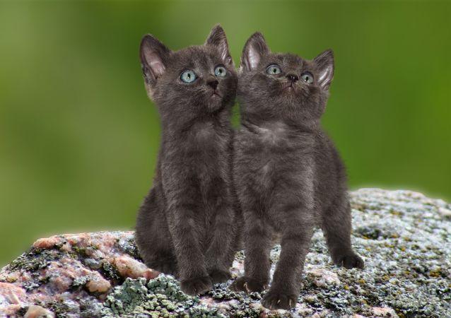 Deux chats (image d'illustration)