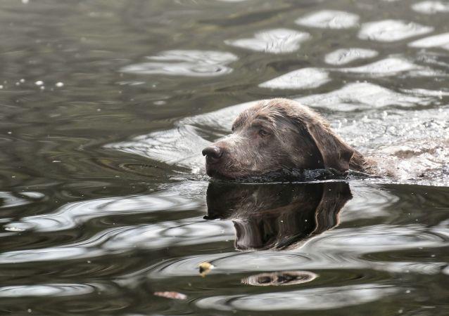 un chien dans l'eau (image d'illustration)