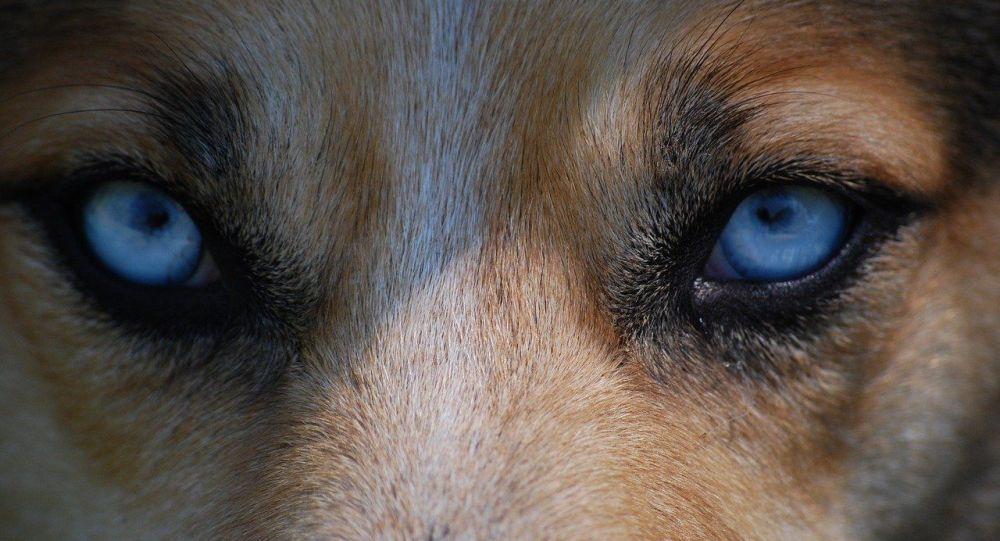 «Elle était dévorée de partout»: le mari de la future maman tuée par des chiens dans l'Aisne témoigne