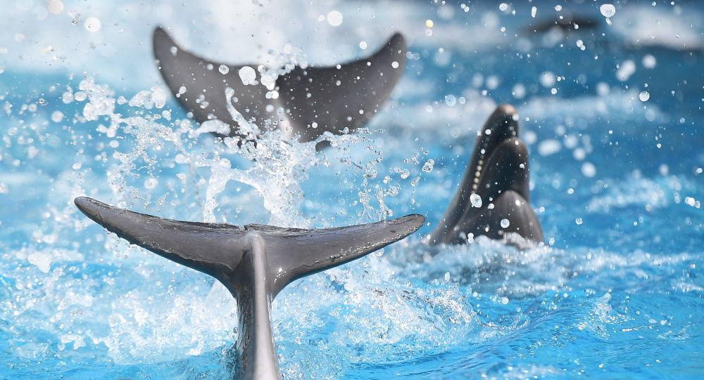 Des dauphins fous furieux attaquent une fillette de 10 ans et la traînent sous l'eau au Mexique