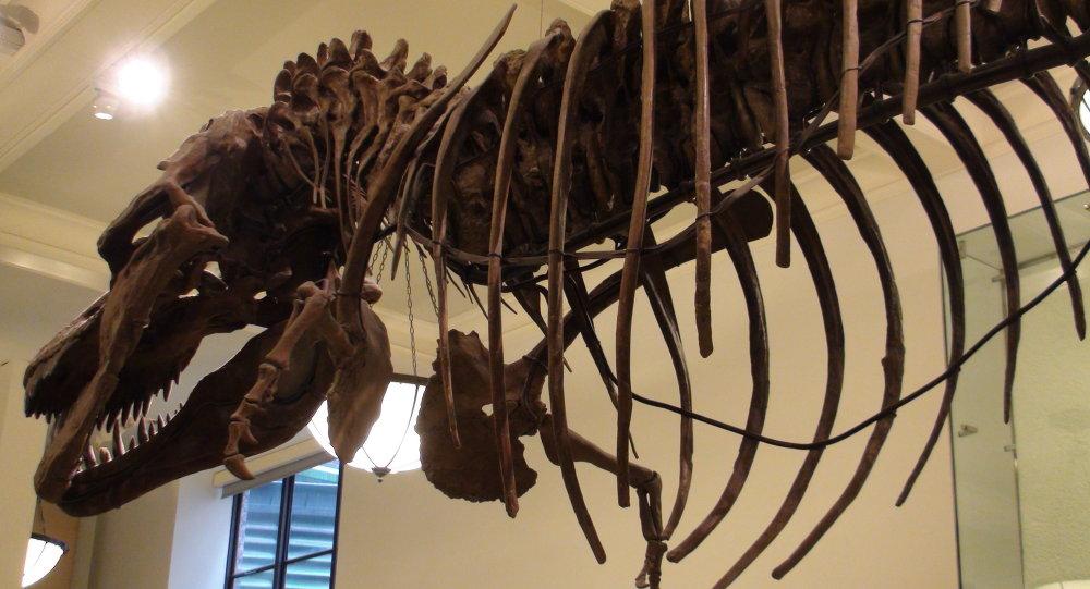 Argentine: découverte des restes du plus grand dinosaure au monde