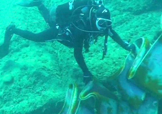 Costa Concordia: les plongeurs examinent l'épave