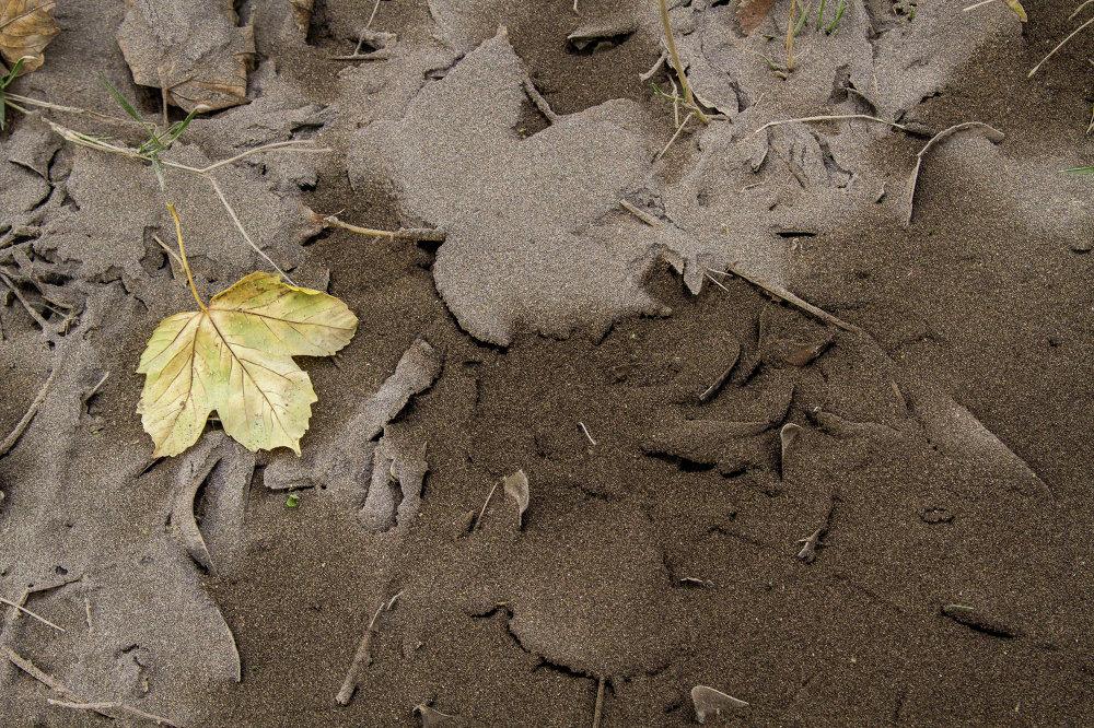 Conséquences de l'éruption du volcan Calbuco au Chili