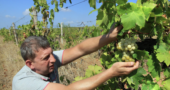 Vignes en Crimée