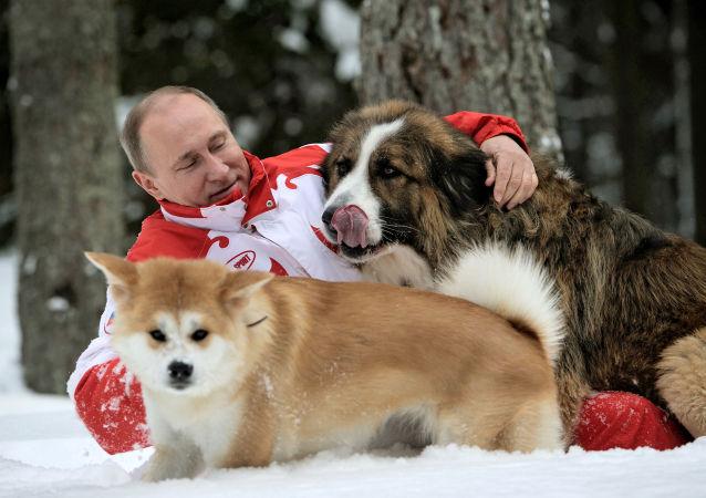 Vladimir Poutine a deux chiens: un berger bulgare (karakachan) baptisé Buffy, offert en 2010 par le premier ministre bulgare Boïko Borissov, et une chienne de race Akita-inu baptisée Youmé (rêve), offerte en 2012 par l'administration de la préfecture japonaise d'Akita
