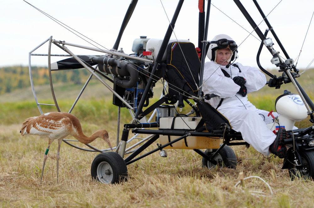 Le 5 septembre 2012, le président russe a participé à une expérience scientifique appelée à préserver les grues de Sibérie, une espèce en voie de disparition
