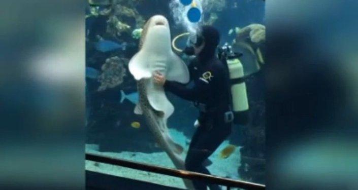 Les requins ont besoin de câlins