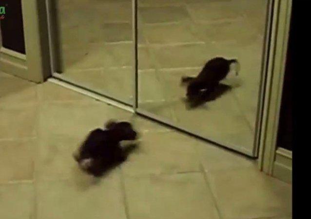 Animaux domestiques se regardent dans une glace
