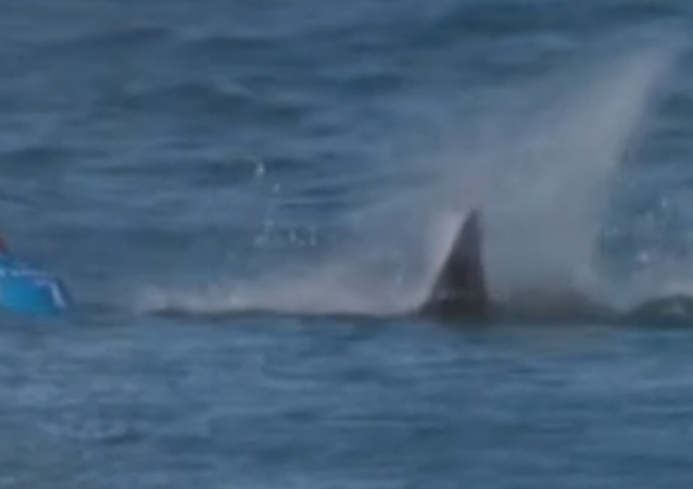 Un surfeur réussit à survivre à une attaque de requin