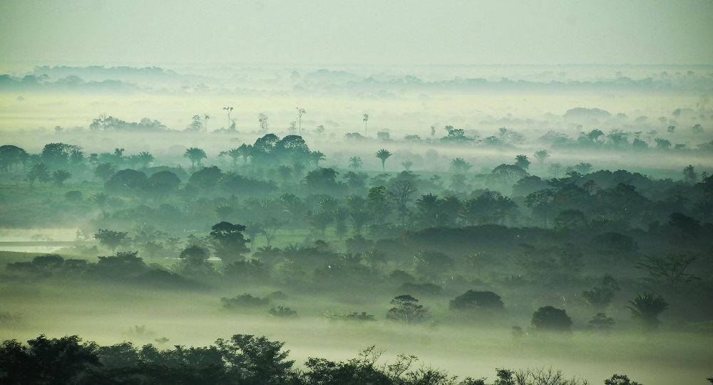 Forêts de l'Amazonie