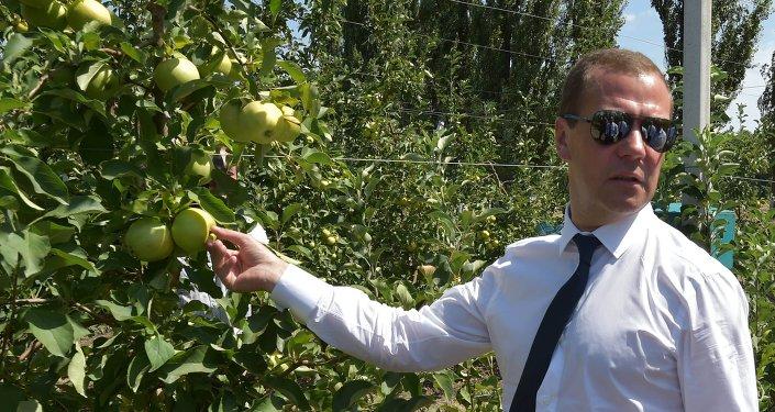 Dmitri Medvedev. Archive photo