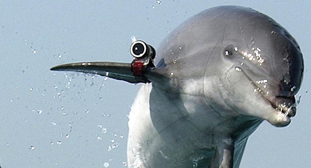 Un dauphin soldat