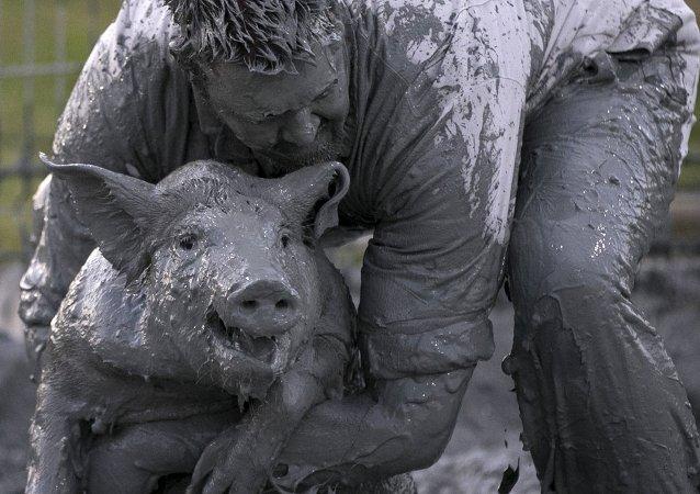 Homme vs cochon: la dash cam la plus bizarre d'Ukraine (vidéo)