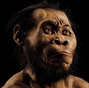 L'australopithèque Lucy a fait une chute d'arbre mortelle