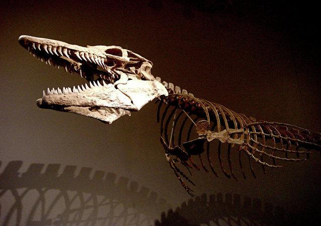 fossile d'un lézard gigantesque