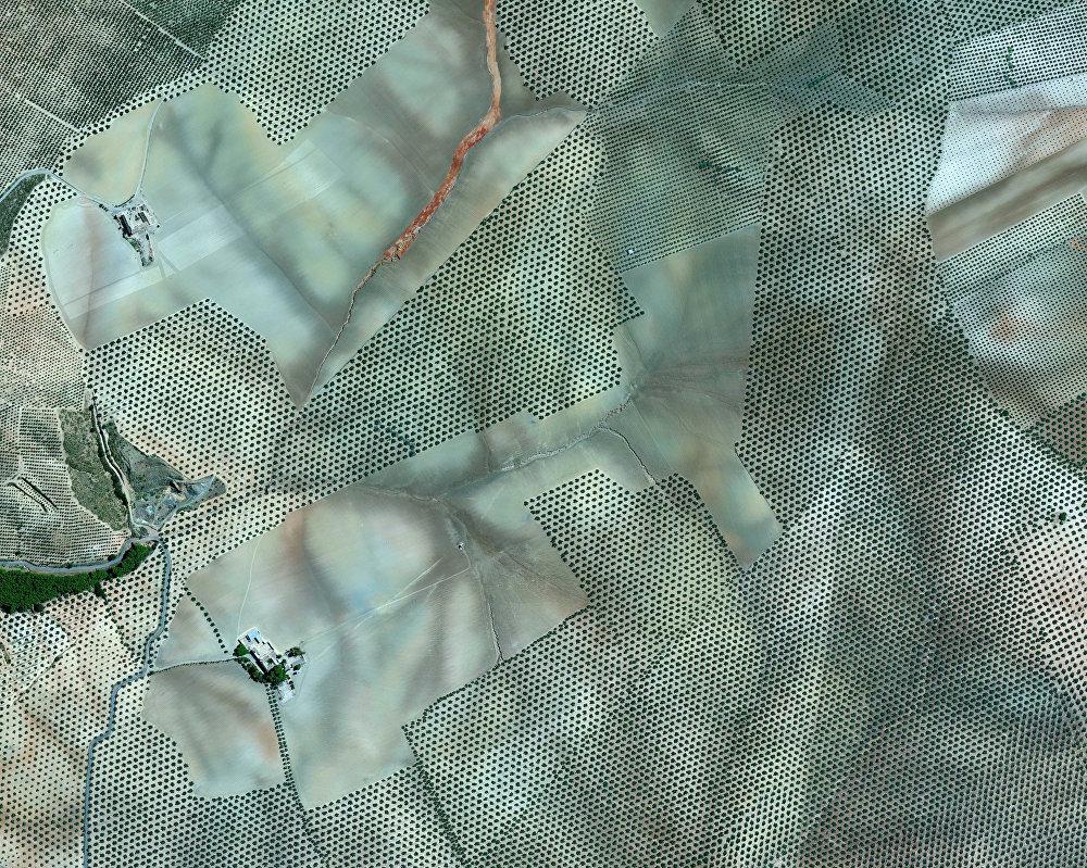 Des plantations d'oliviers près de la ville de Cordoue, Espagne