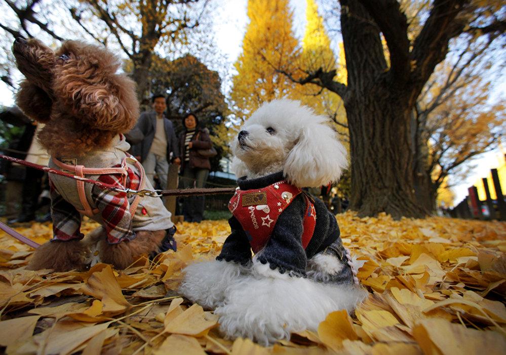 L'automne dans un parc public, Tokyo, Japon
