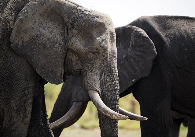 éléphants, parcs nationaux au Zimbabwe
