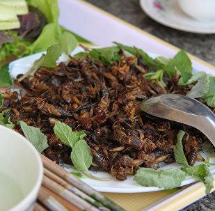 Des insectes comestibles