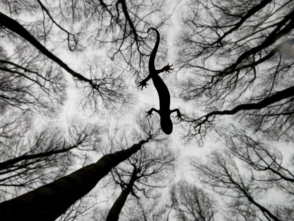 Les plus belles photographies de la nature sauvage
