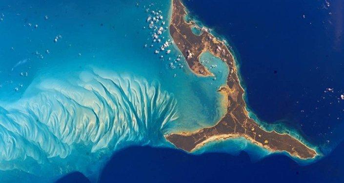 Un poisson avec des pieds et un nez humain trouvé en mer des Caraïbes