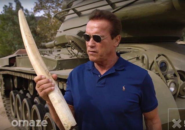 Schwarzenegger se mobilise pour les éléphants